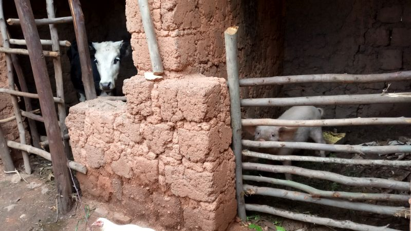 Rwanda's rural homes typically have some animal rearing