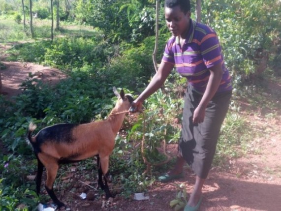 NYIRAMINANI Esperance, 30, received a goat as one of transformative group members