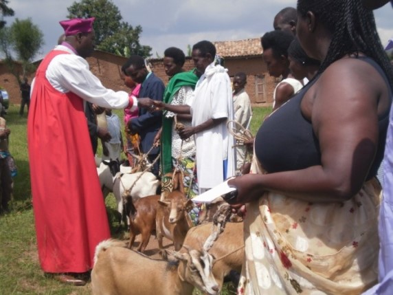 Duterimbere group in Butare: each family received one goat and one pig